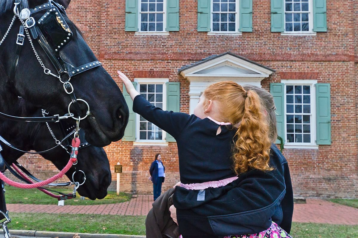 Carriage horses at the Colonial Courthouse, Edenton, North Carolina (Photo by Kip Shaw)