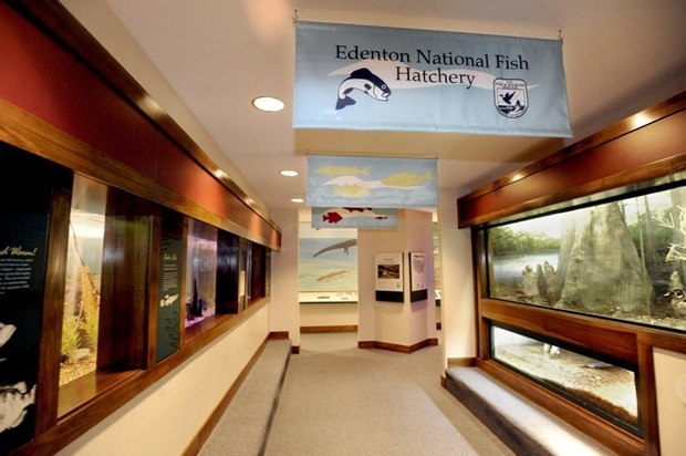 Outdoor recreation visit edenton chowan county north for Taylor fish farm